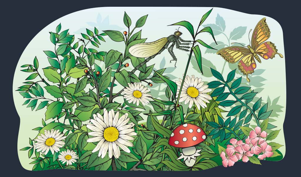 Flowers-and-Bugs-Illustration Web Design, Graphic Art