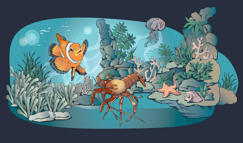 Sealife-and-Birds-Illustration Web Design, Graphic Art