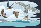 Sealife-and-Birds-Illustration