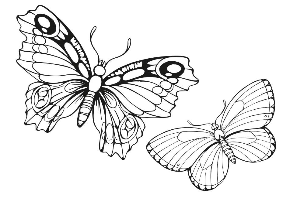 Web Design, Graphic Art
