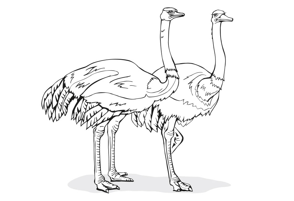 Animals-and-Nature-LineArt-Illustration Web Design, Graphic Art