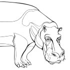 Animals-and-Nature-LineArt-Illustration
